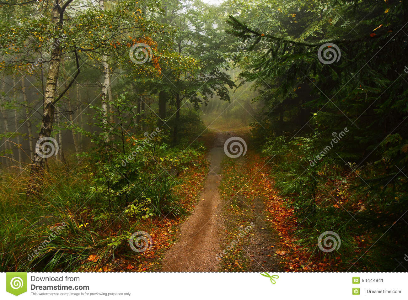Foggy Forest With Rain Drops Sound Stock Footage Video 4560677 ...