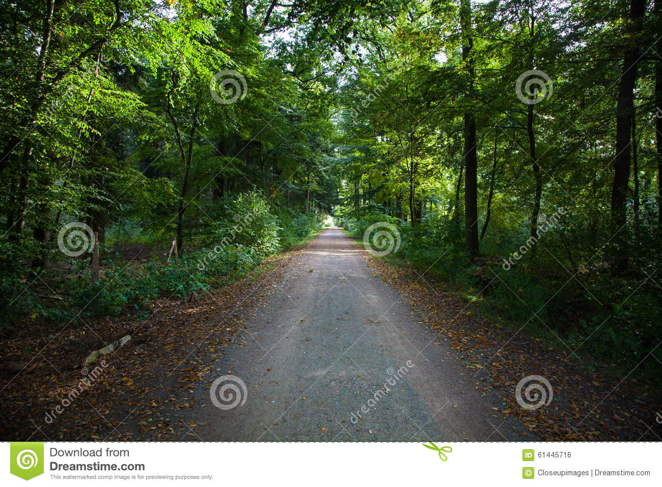 Forest Footpath verde