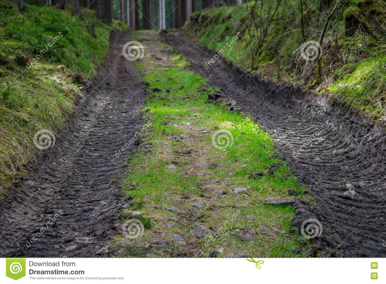 Forest forestry road mud way in green