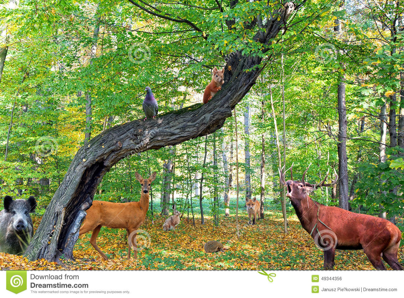 Forest Full Of Animals Stock Photo - Image: 49344356