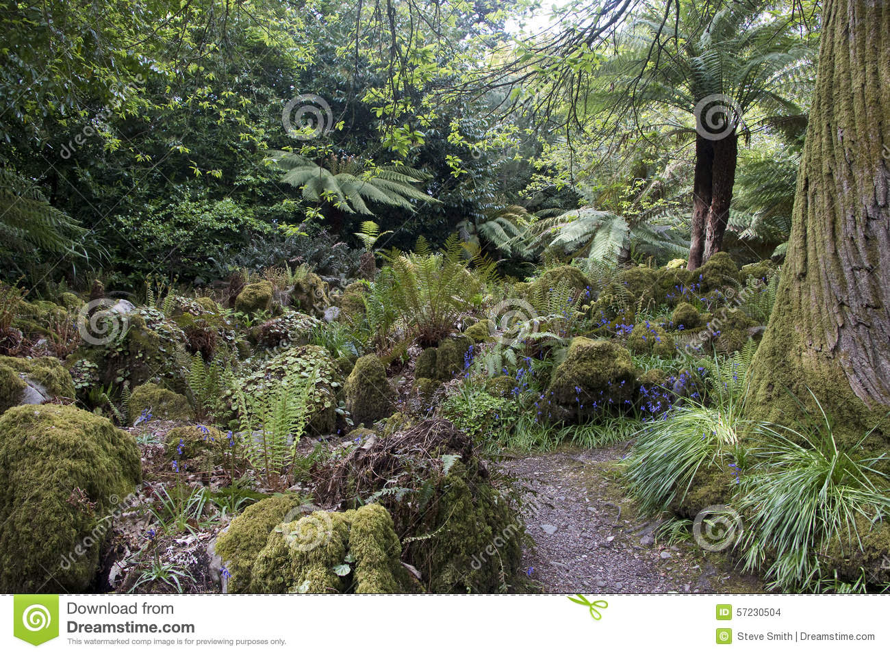 Backyard Forest Management : Forest Garden With Tree Ferns Near Cork, County Cork Stock Photo