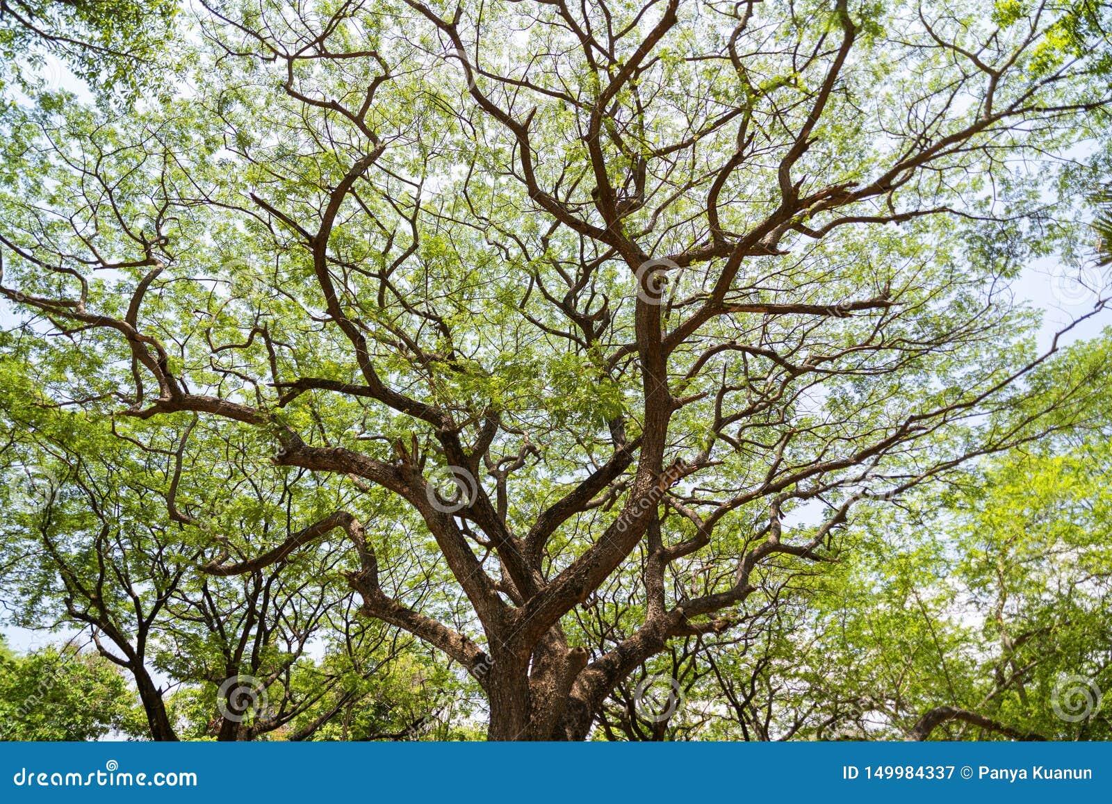 Forest Growth Trees,nature Green Trees Rainforest For ... on tropical garden design, desert garden design, wetland garden design, subtropical garden design, bird friendly garden design, coastal garden design, jungle garden design, tree garden design,
