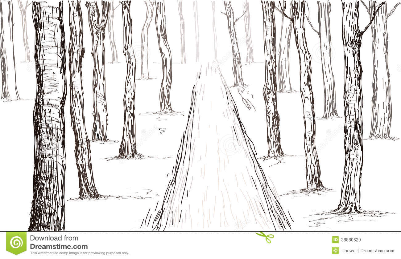 forest hand drawing sketch 38880629