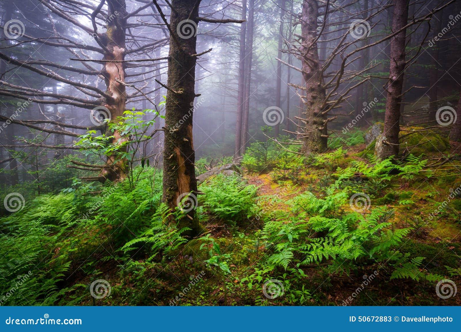 Forest Hiking Appalachian Trail North scenico Carolina Nature Lan