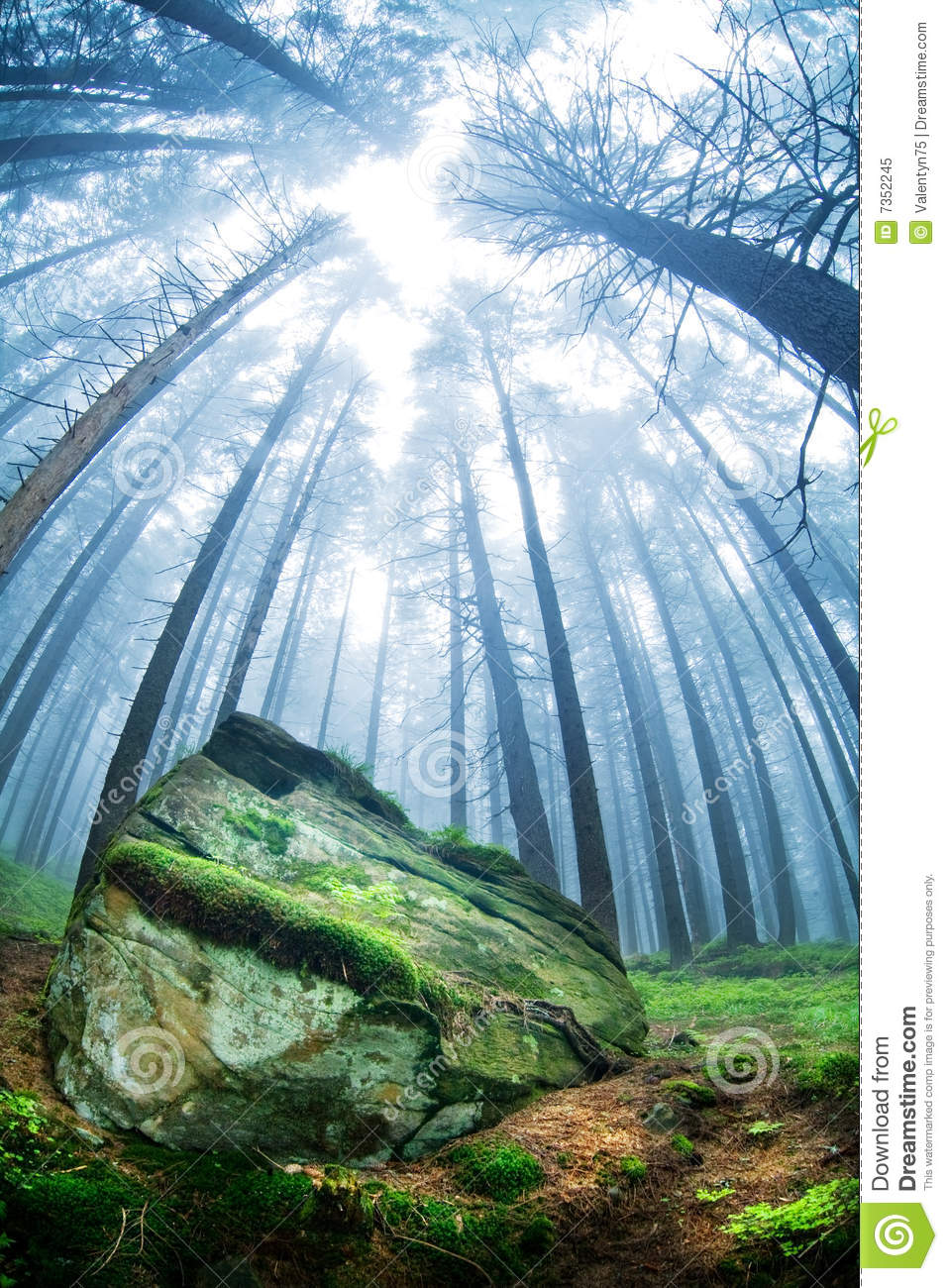 Nature Images 2mb: Forest Landscape Stock Image. Image Of Trees, Green, Stone