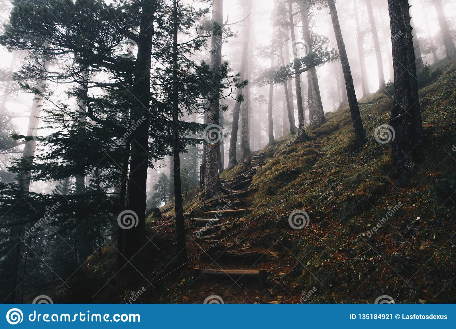 Forest landscape at winter with a foggy environment background