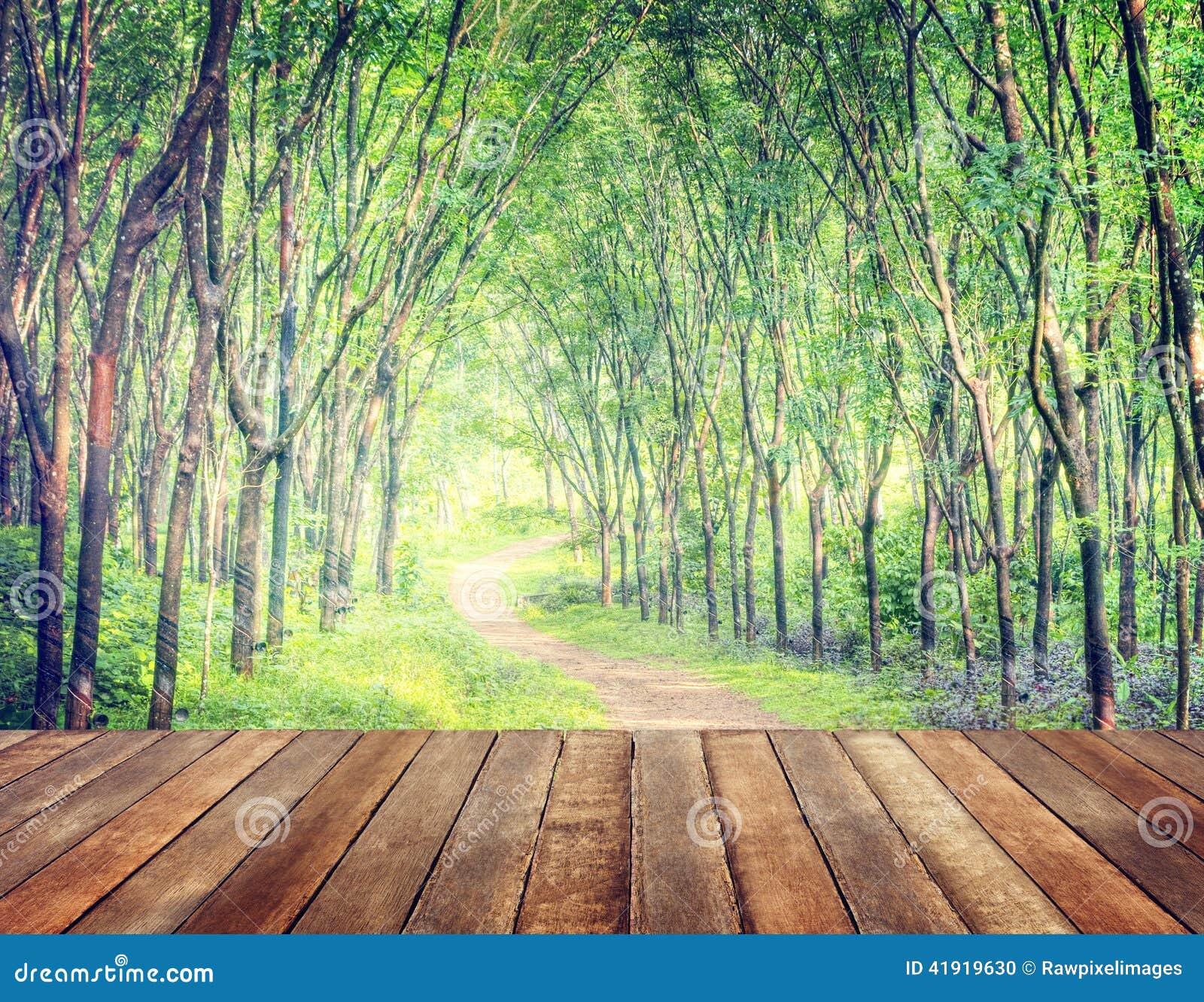 Forest Lane que encanta en una plantación del árbol de goma
