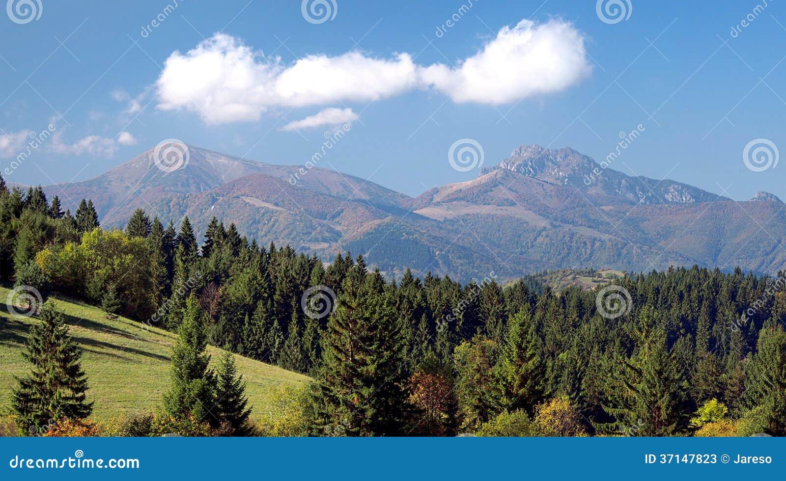Forest and Mala Fatra above Jasenova village