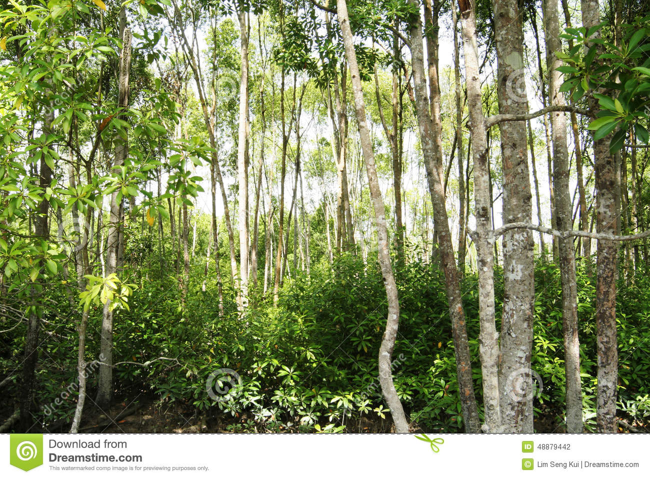 production of pr protein 1 in mangroves leaves Mangroves are the trees that you will find the most throughout the coastline 1 without roots or leaves in this case plant them before the protein-skimmer.
