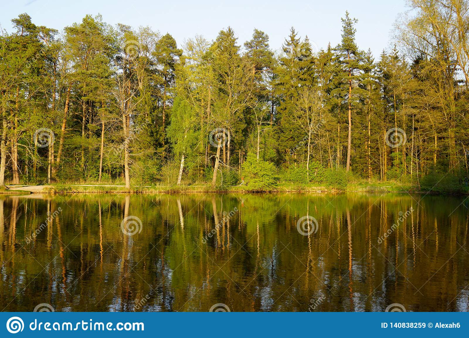 Forest mirror in lake at sunset