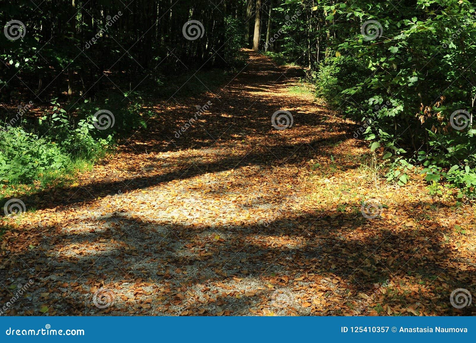 Forest near Pisek, Southern Bohemia, Czech Republic