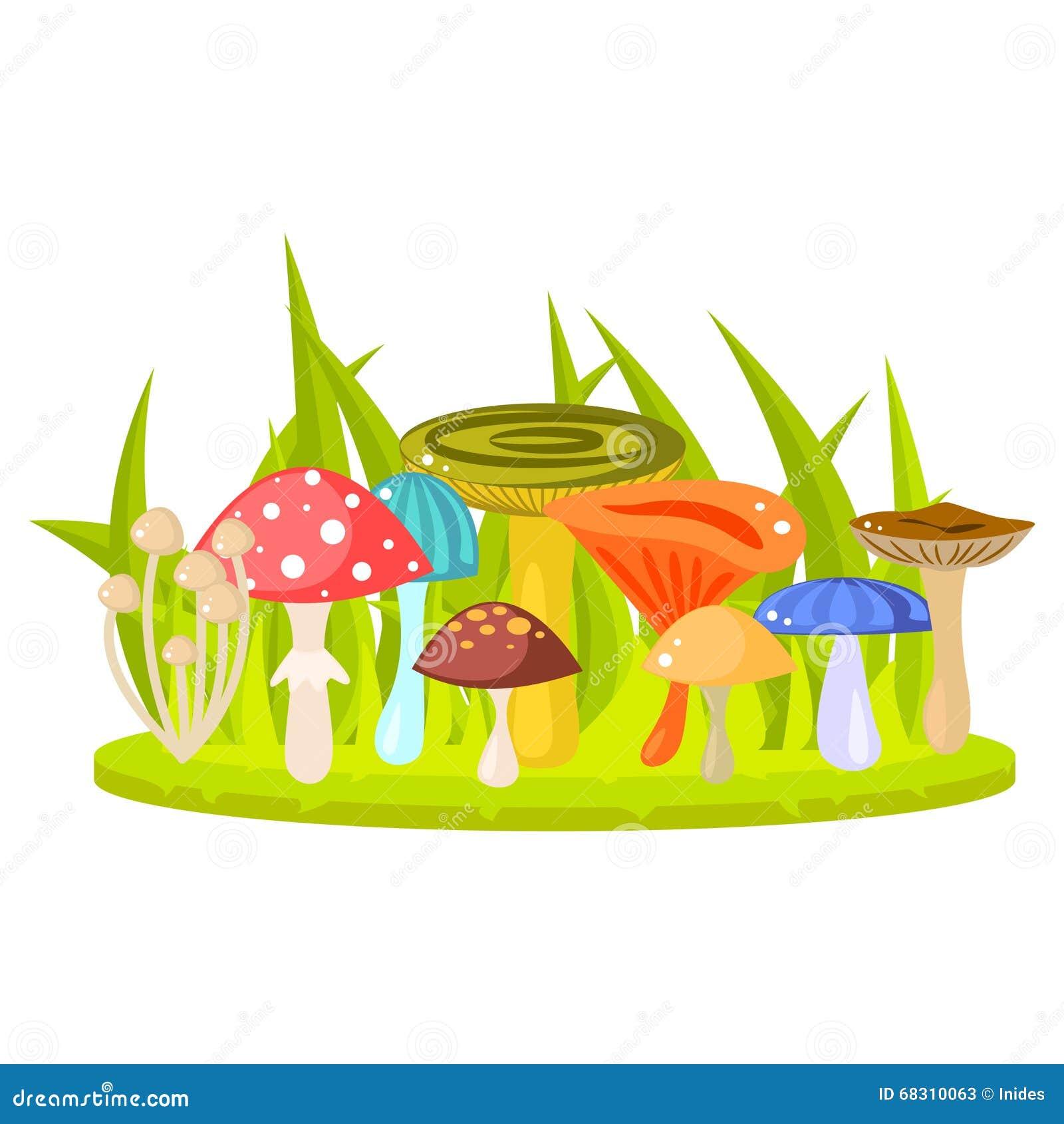 Forest mushrooms on grass lawn vector illustration.
