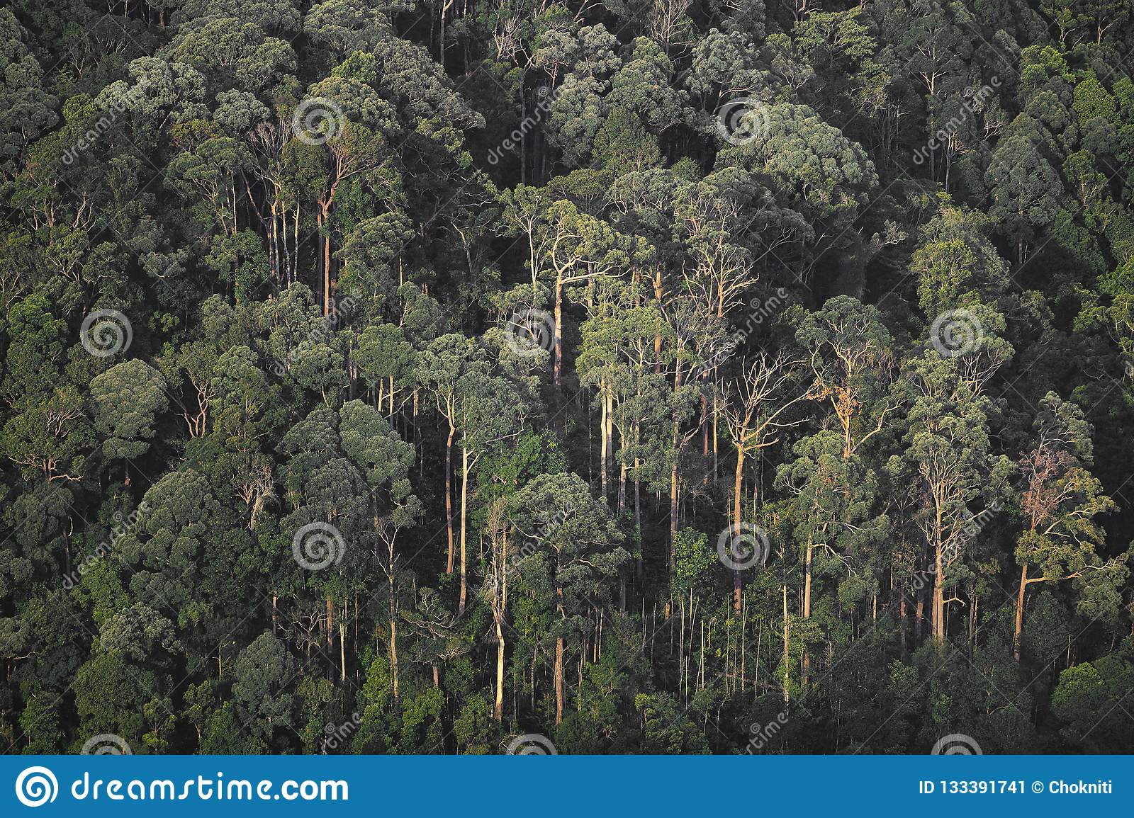 forest, nature landscape view of tropical forest with layers of