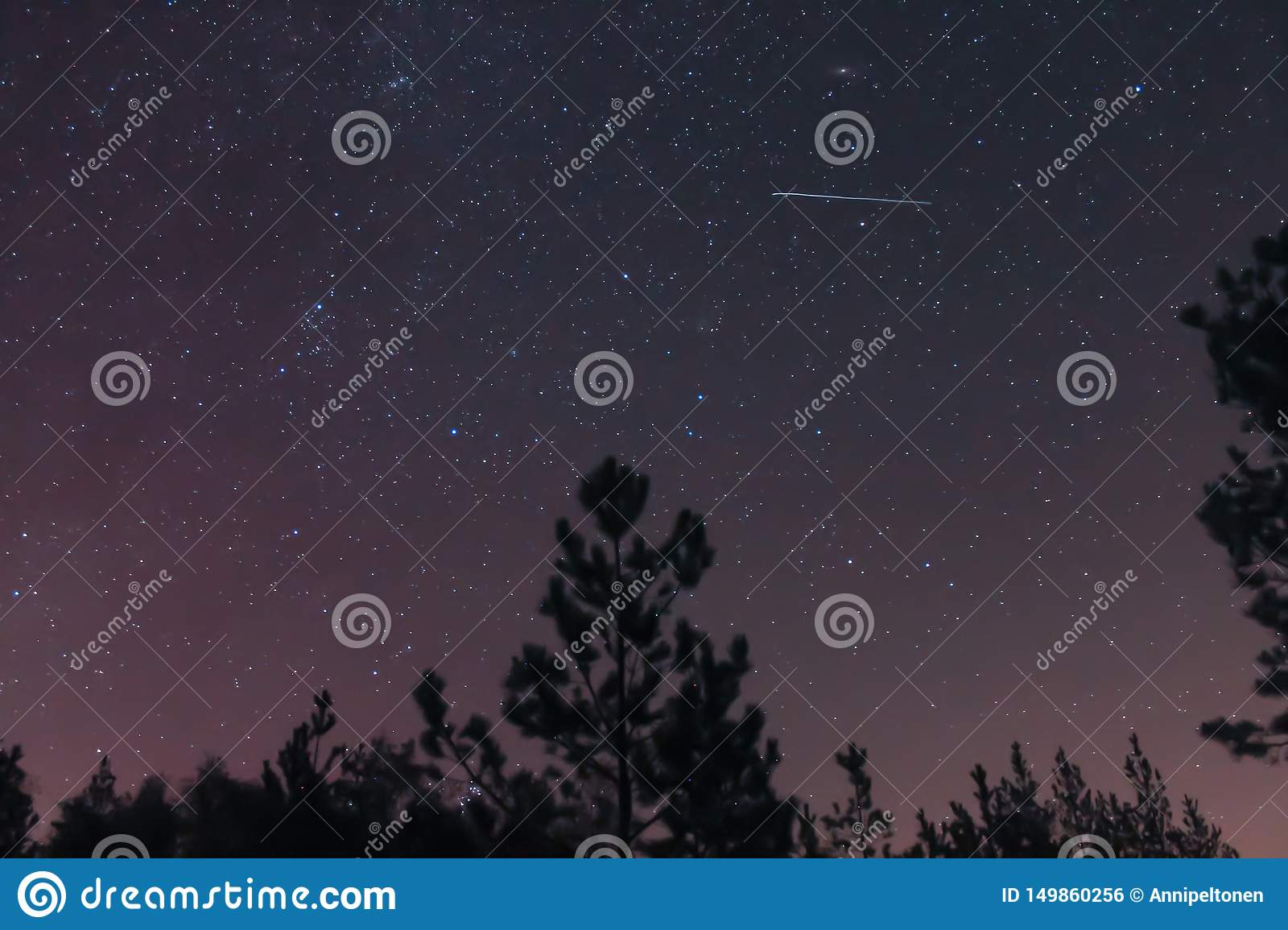 Forest night sky and a shooting star