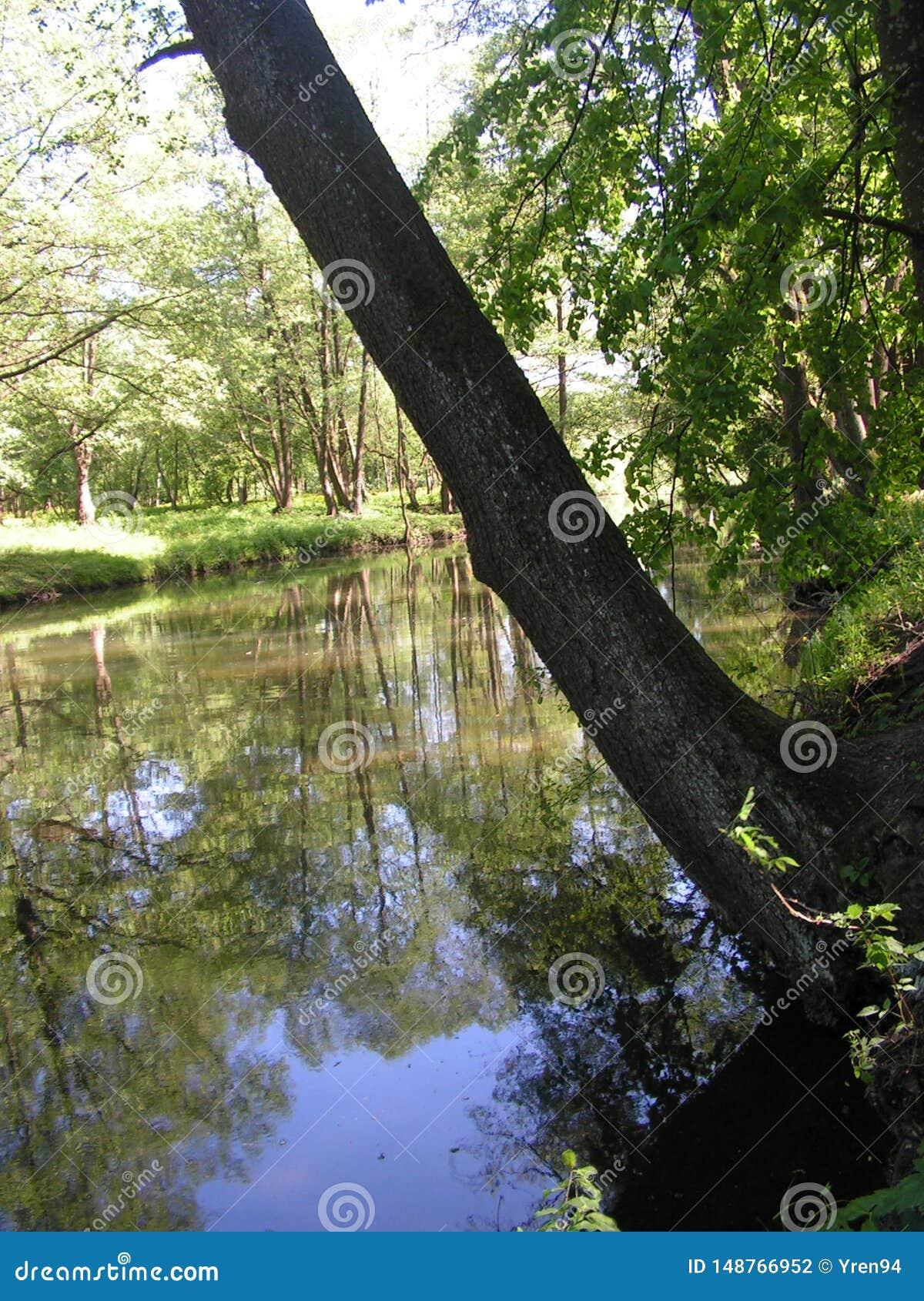 11 Forest Park ?DROZDY ?in Minsk Wei?russland