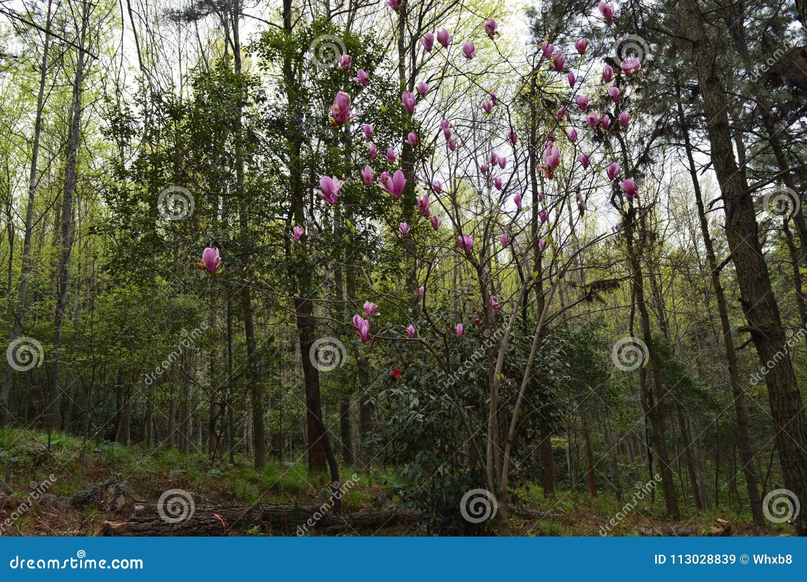 Forest Park en el ` anshan Wuhan del mA