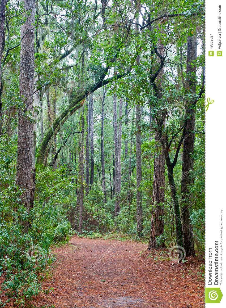 Royalty-Free Stock Photo & Forest Path With A Canopy Of Trees And Spanish Moss Stock Image ...