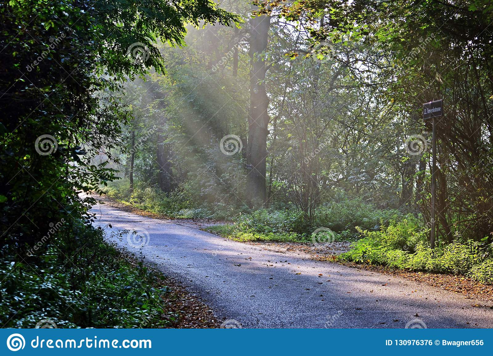 Forest Path In Lobau Stock Photo Image Of Colors Sport 130976376