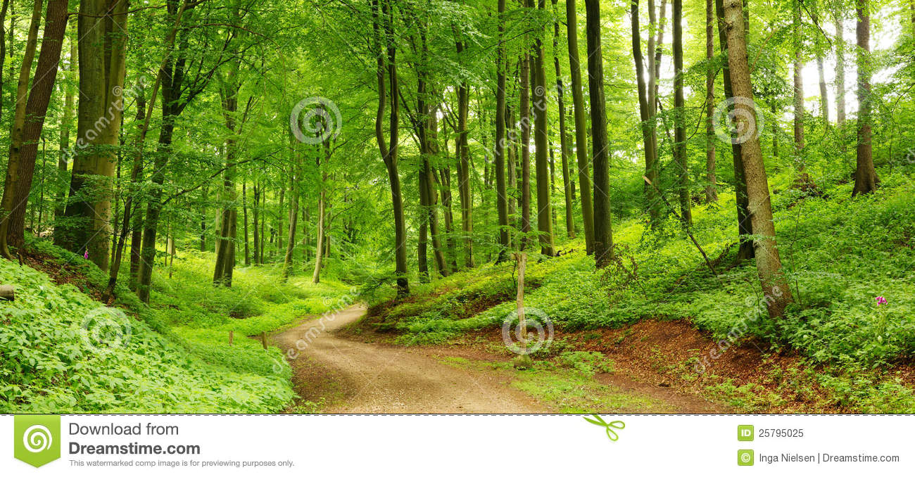 Forest path panorama