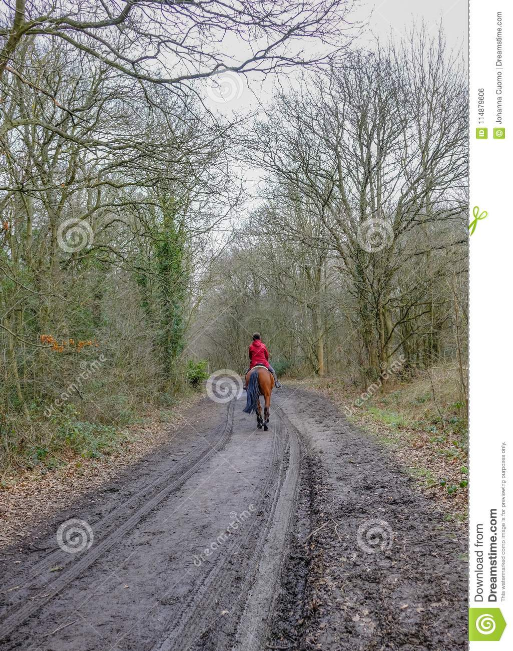 Forest path with rear view of lady in red riding a chestnut horse.