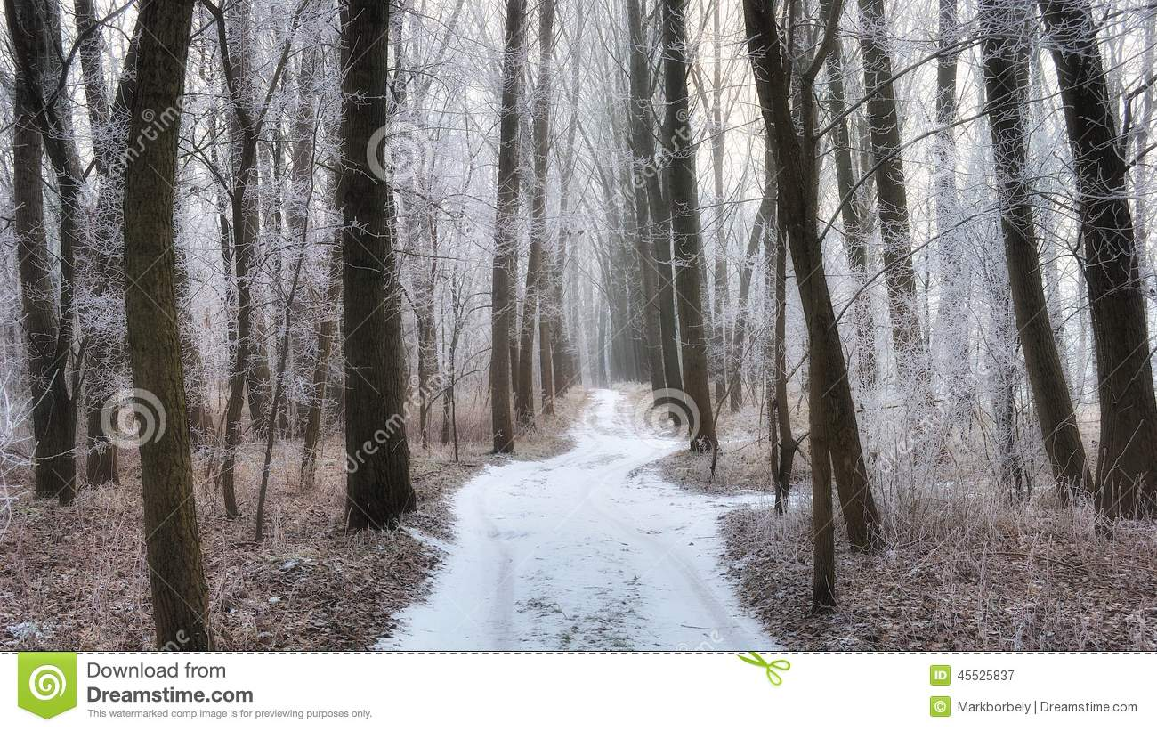Frosty forest path in the winter