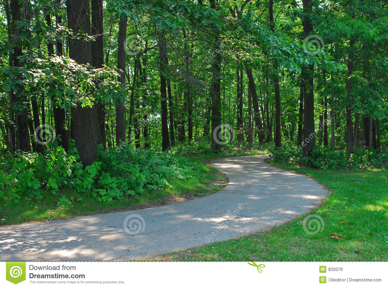 Forest path1