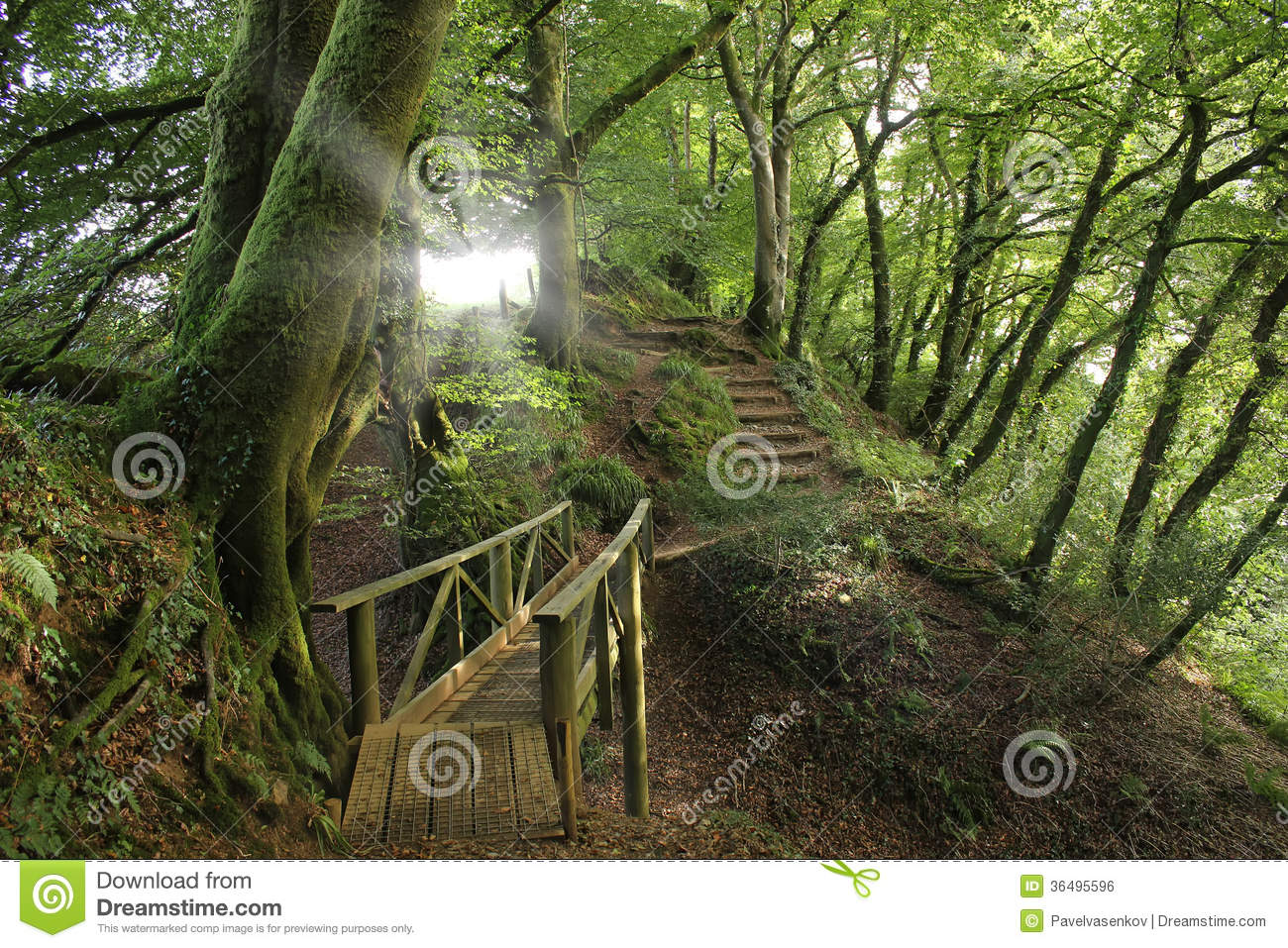 Forest paths england stock photo image of moss sussex for Garden trees england
