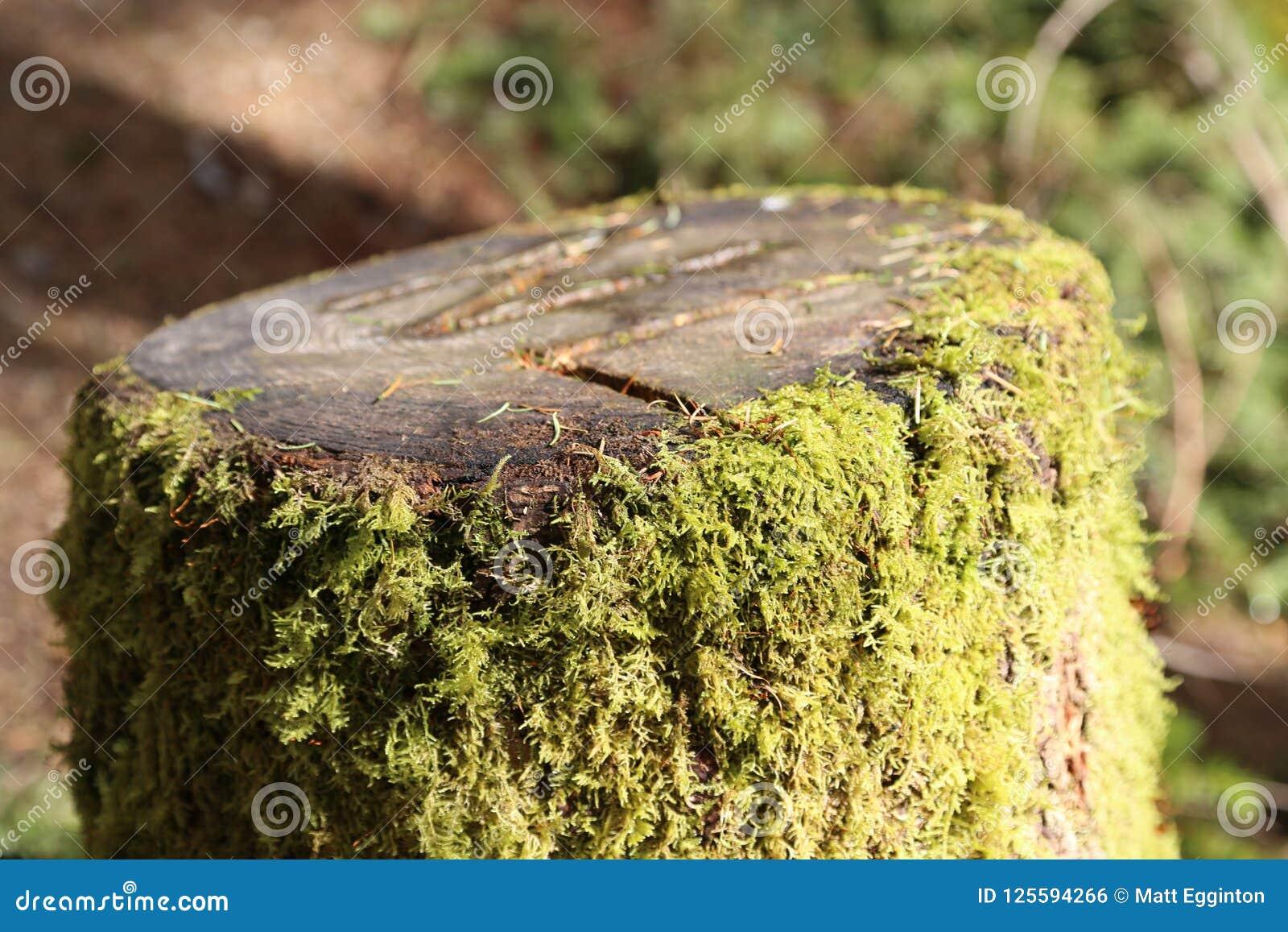 Forest Pathway - klipp trädet med mossa