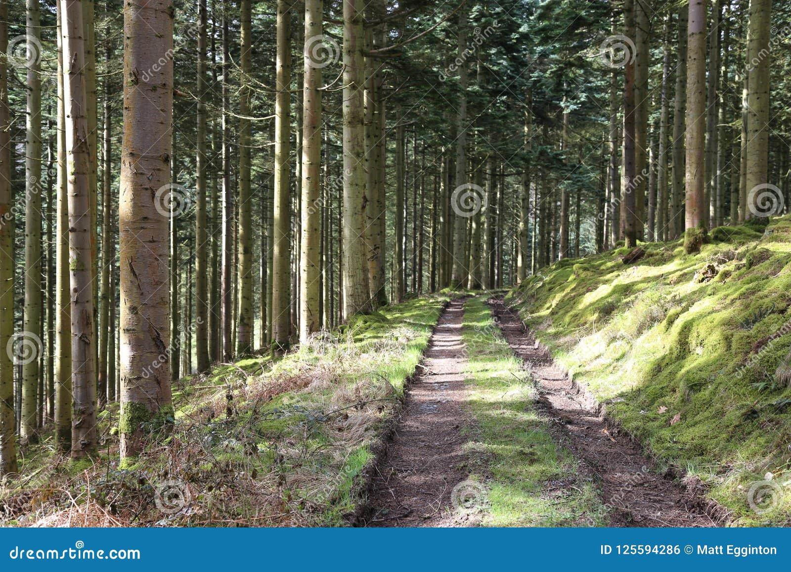 Forest Pathway - skogsbevuxen slinga