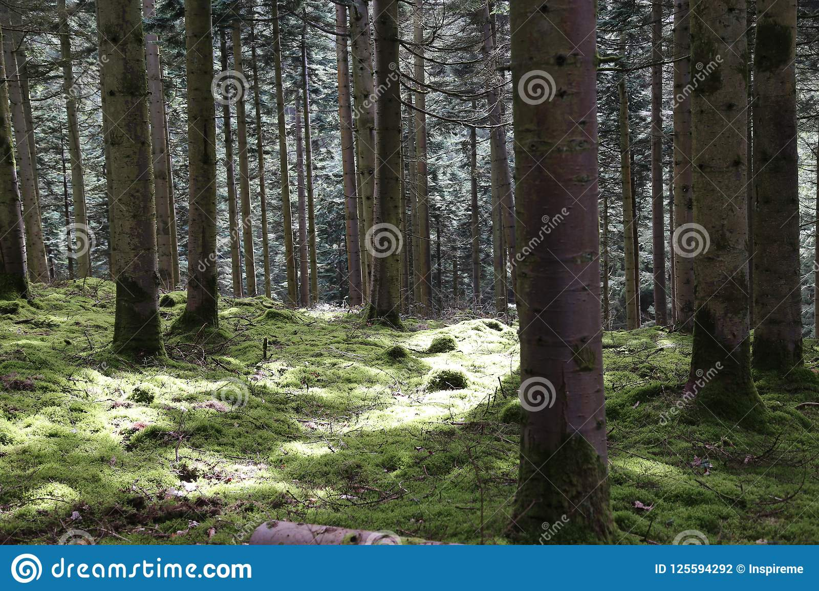 Forest Pathway - solljus