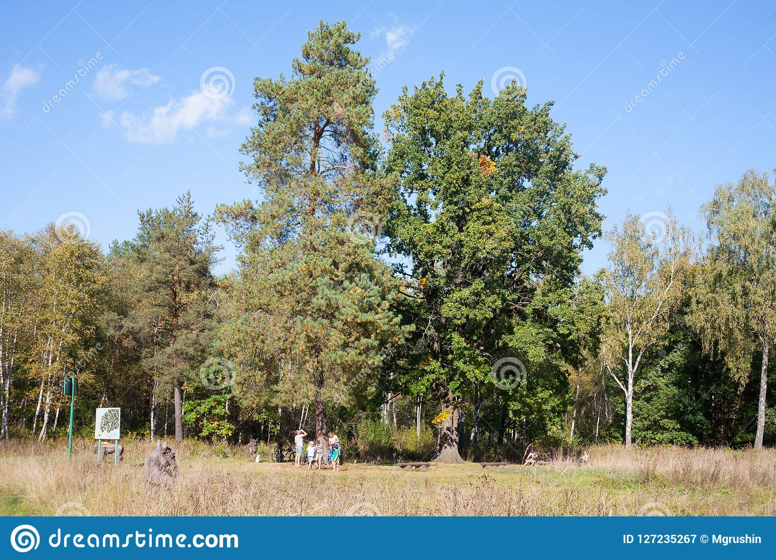 Forest and people in Losiny Ostrov National Park 20.09.2018