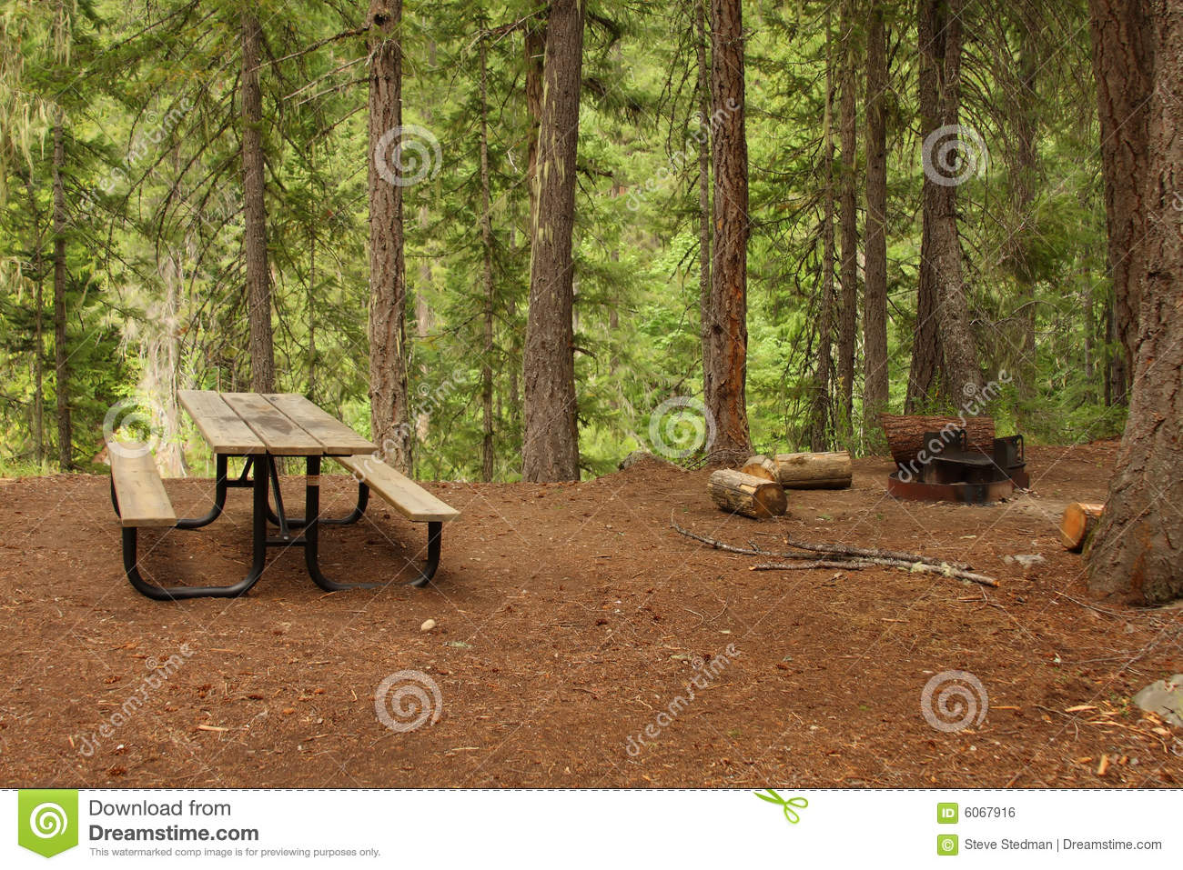 Forest Picnic Area Stock Photo Image Of Nature Field