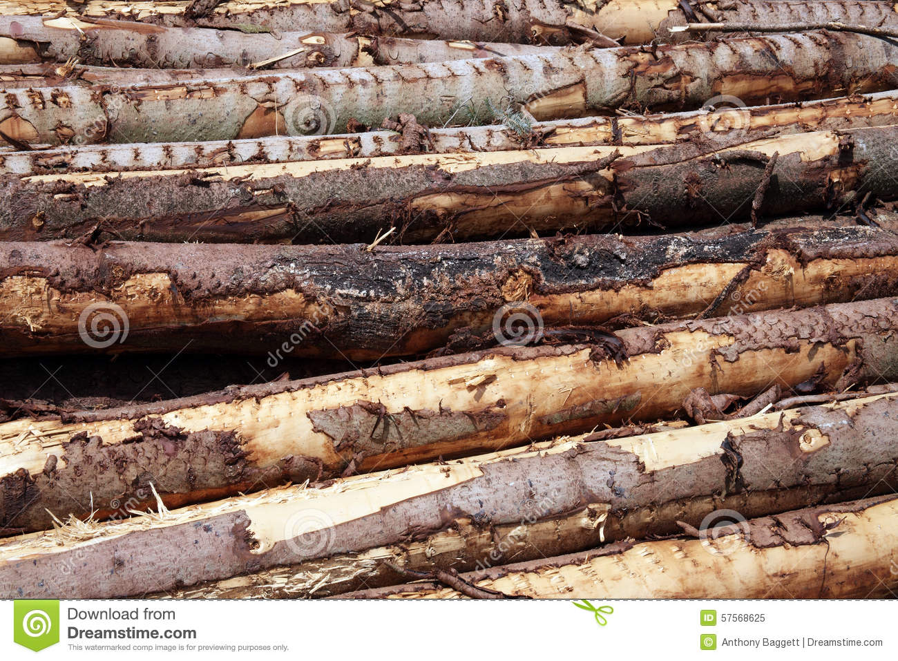 Forest pine trees logs background stock photo image Pine tree timber