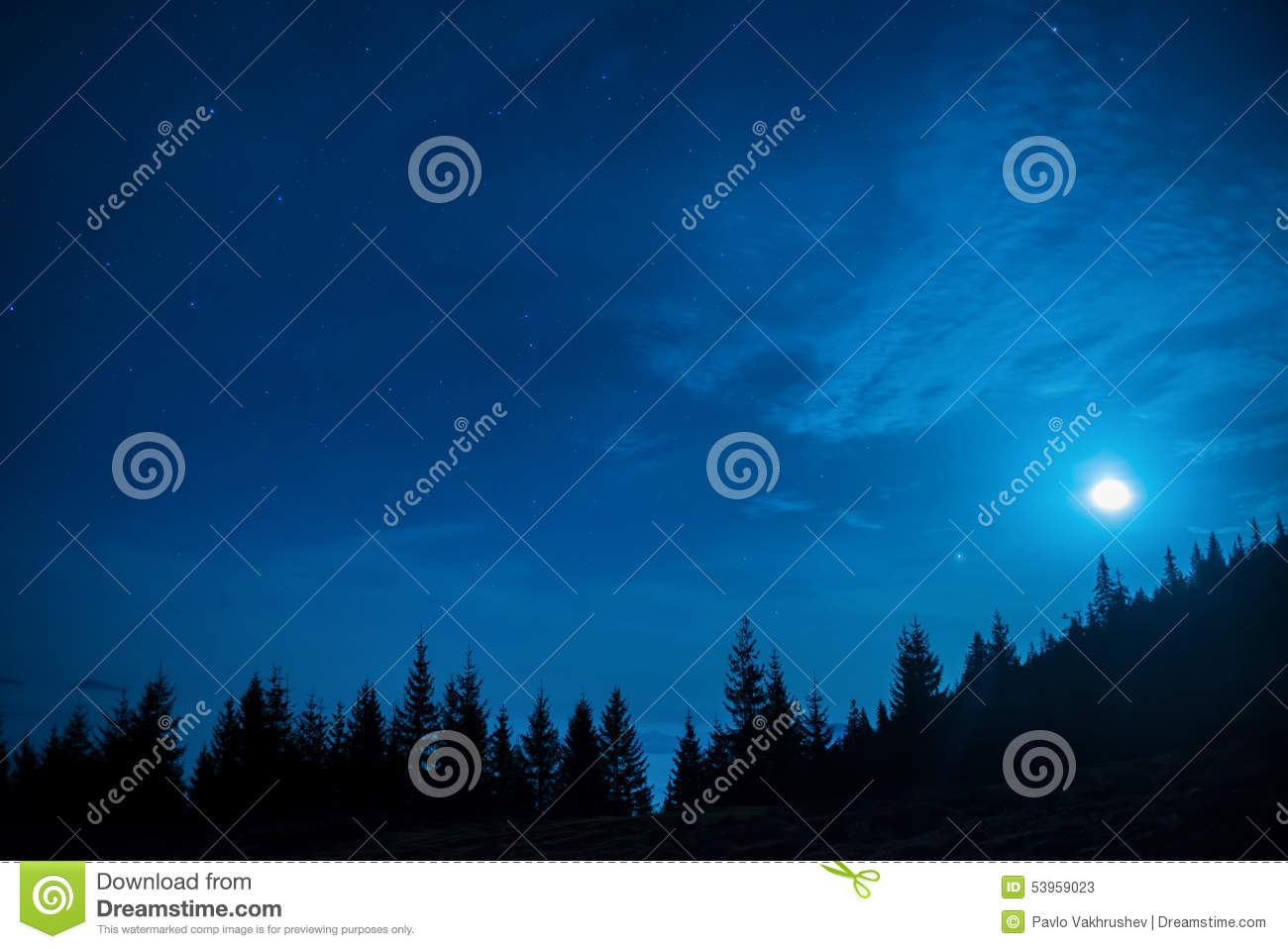 Forest of pine trees under moon and blue dark night sky