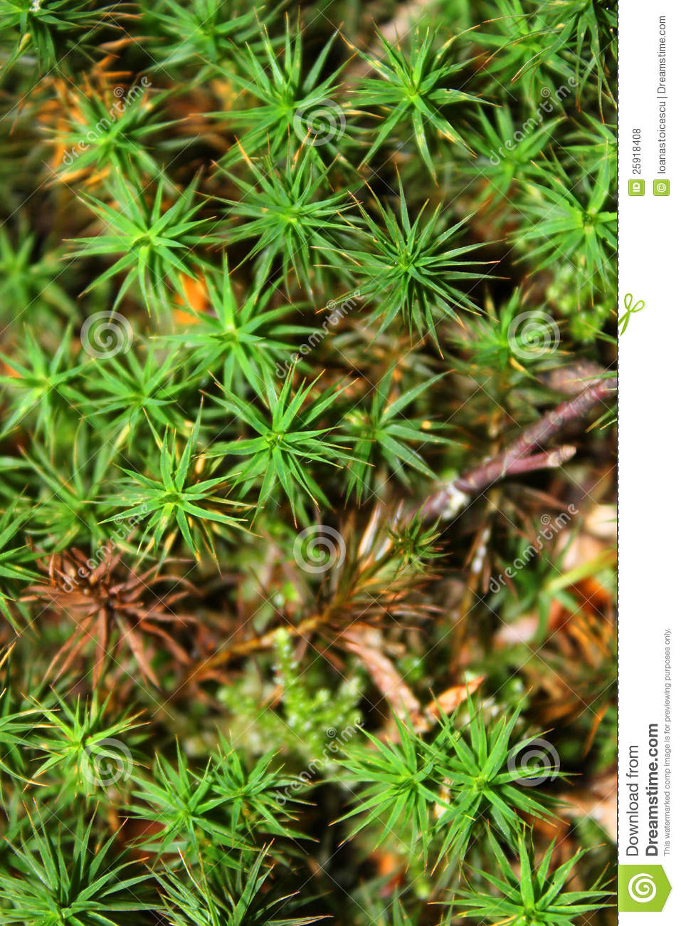 Forest Plants Closeup Stock Photo Image Of Forest Small