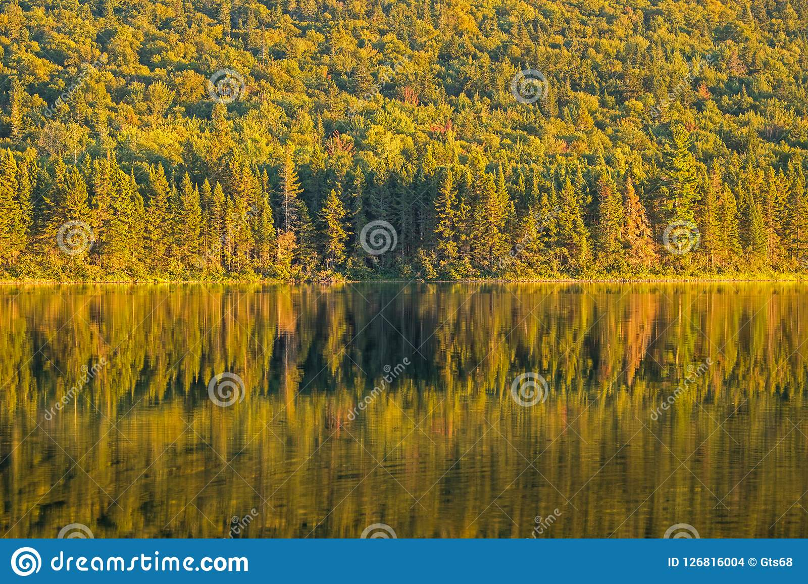 Forest Reflected On Big Nictau Lake In New Brunswick