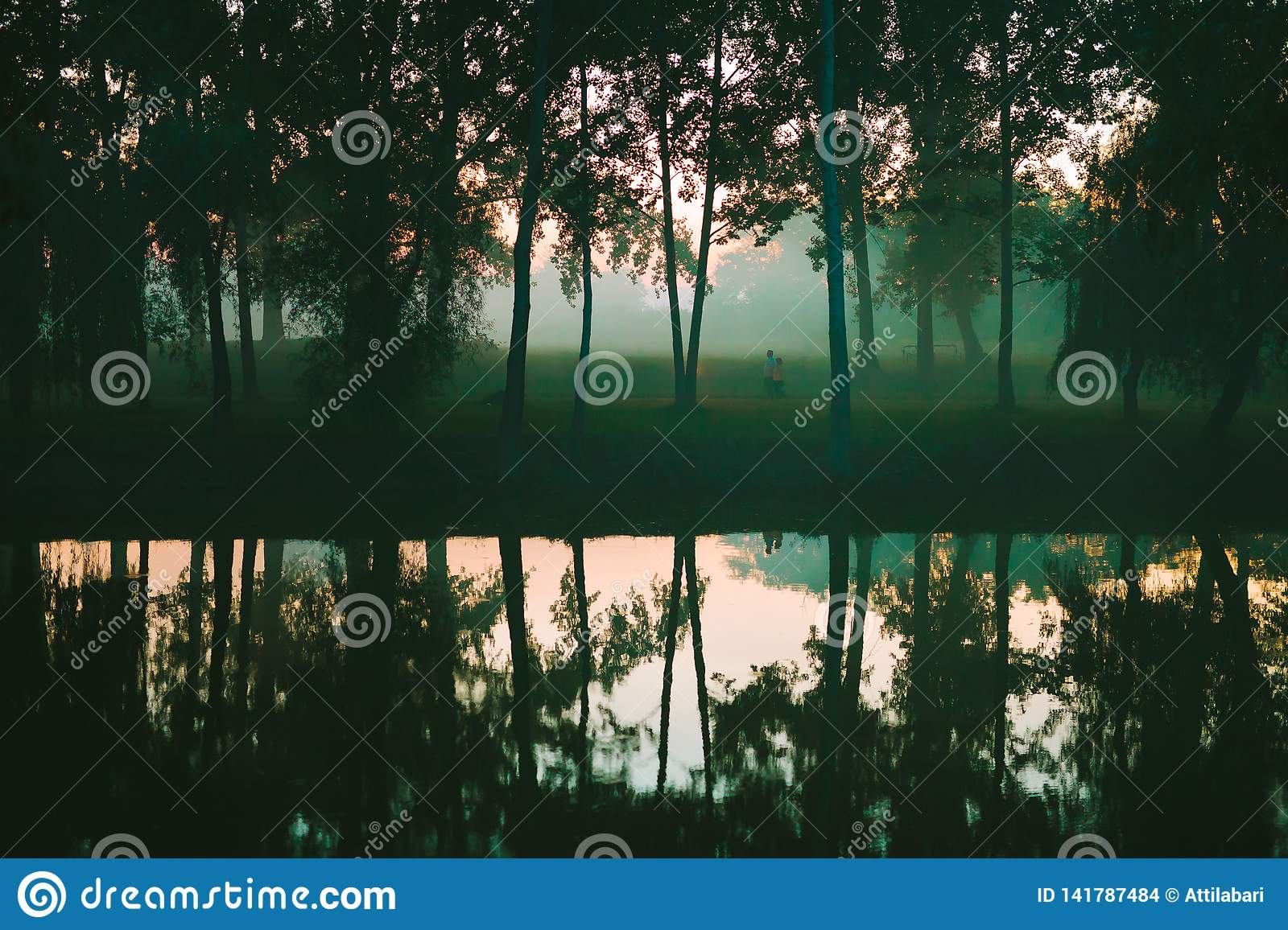 Forest reflections on the lake