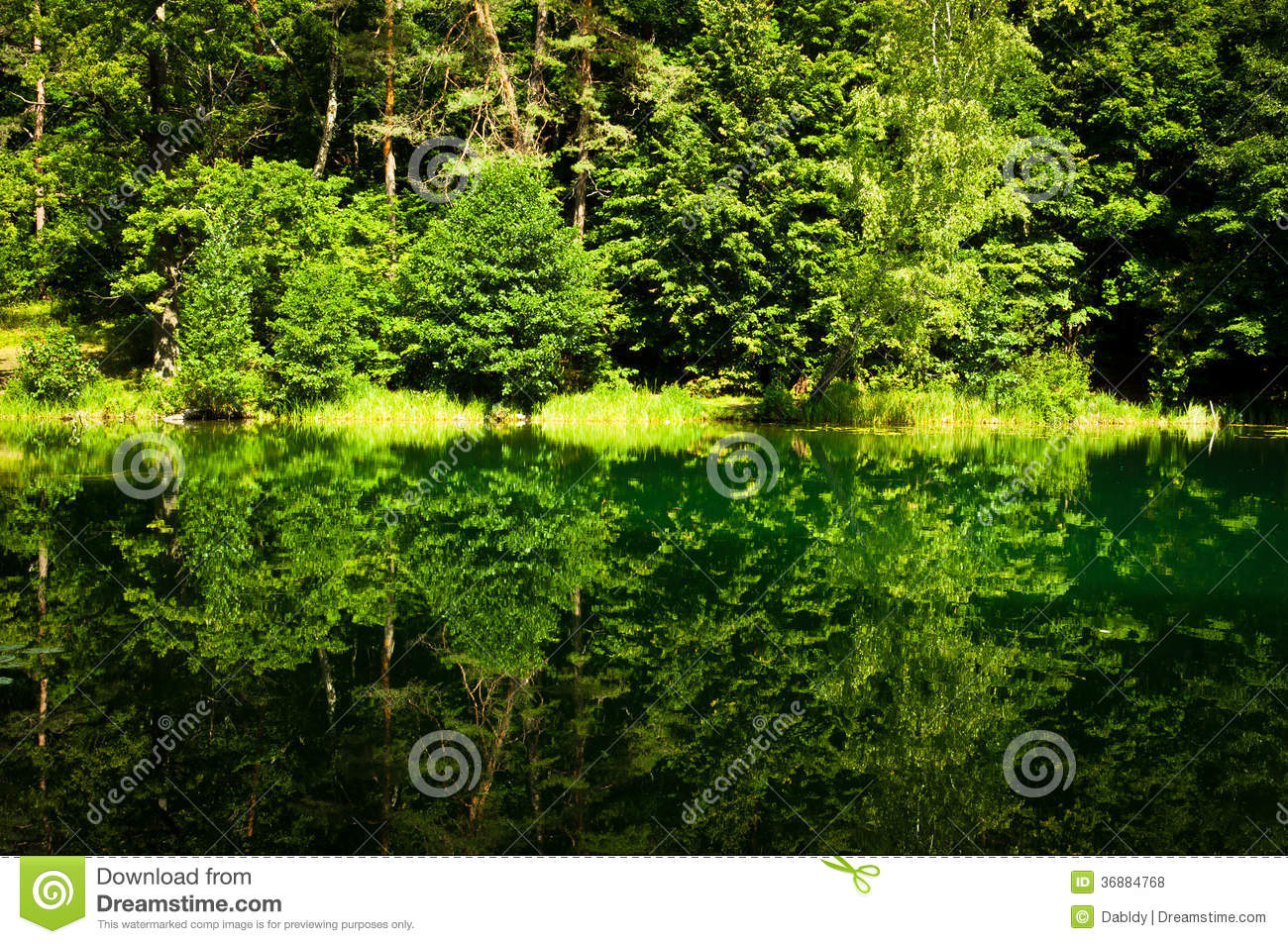 Download Forest Reflection Verde Nel Lago Fotografia Stock - Immagine di alba, aperto: 36884768