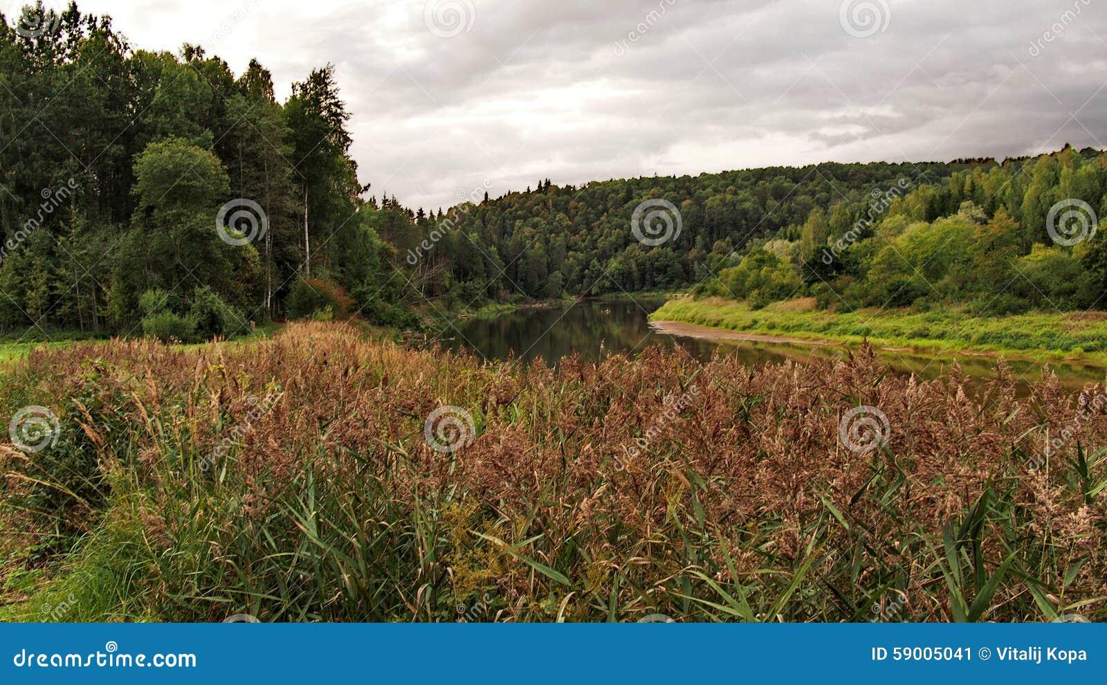 latvian autumn forest river - photo #4