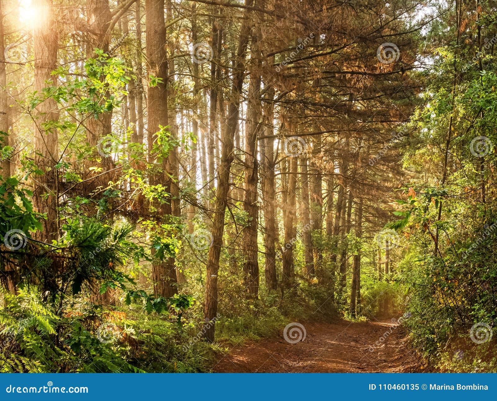 Forest Road Landscape