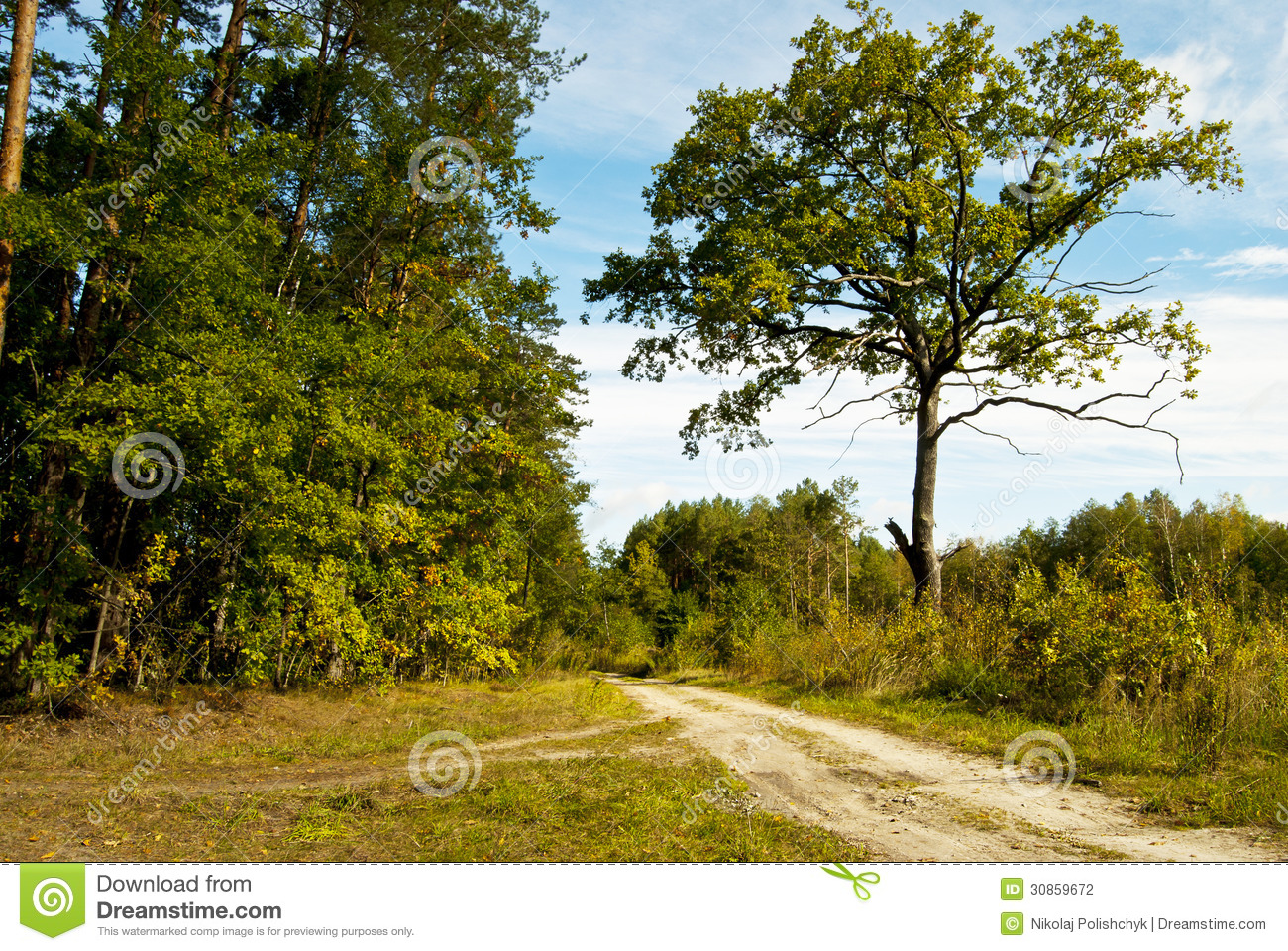 Forest road stock photography image 30859672 for Sunny landscape designs