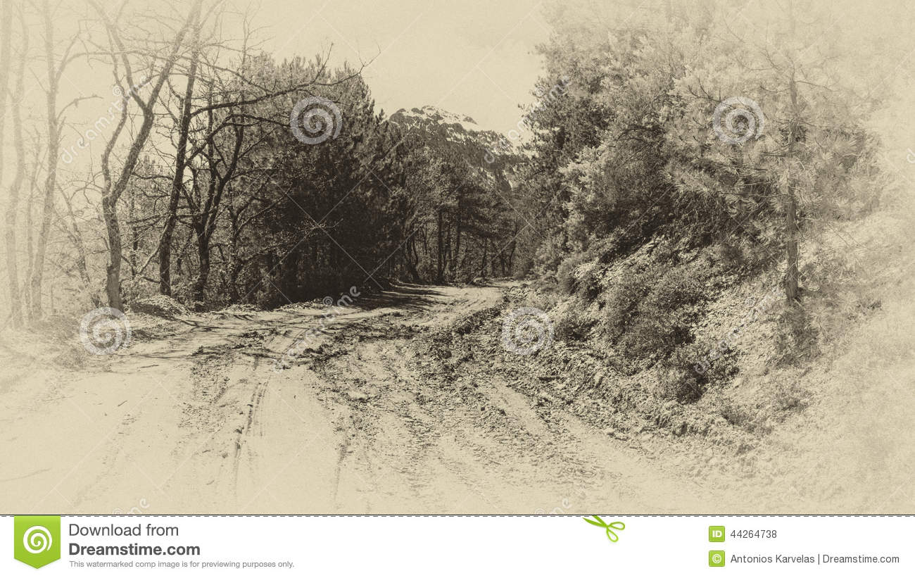 Forest Road Mud old monochrome photo