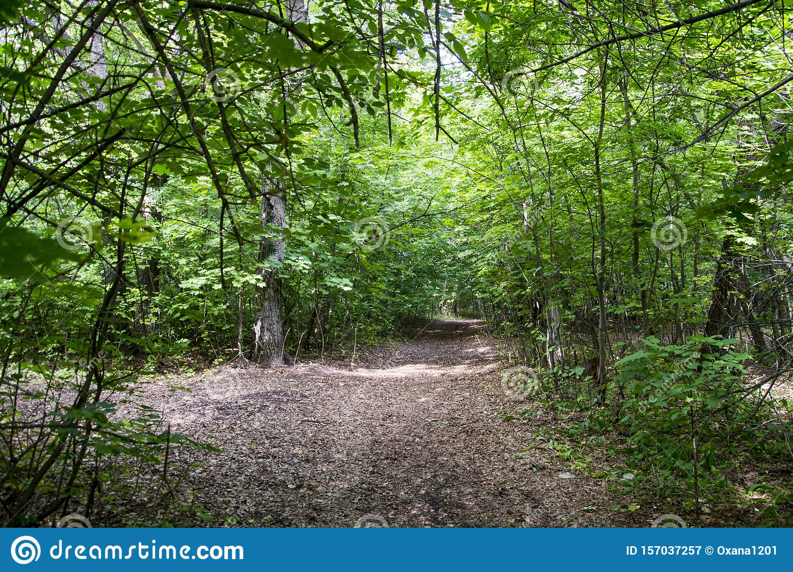 The Forest Road Stock Image Image Of Road Summer Green 157037257