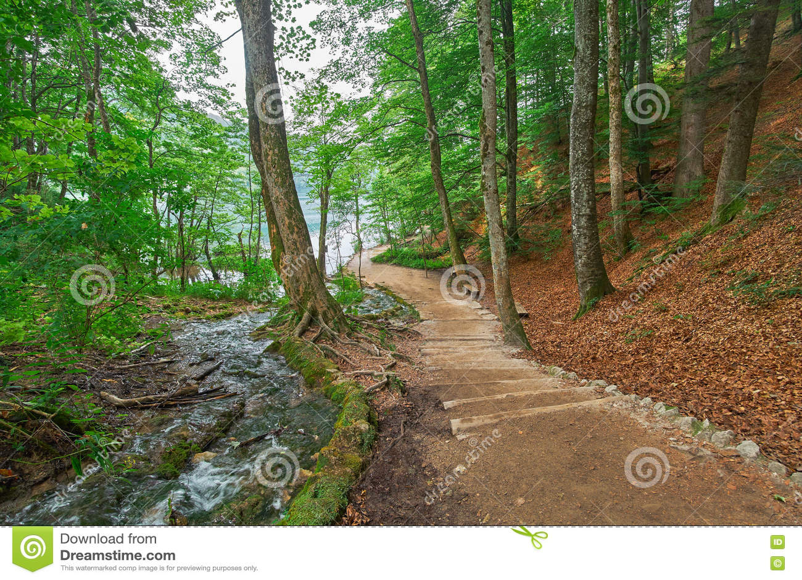 Forest Road Trail in Plitvice, Kroatië