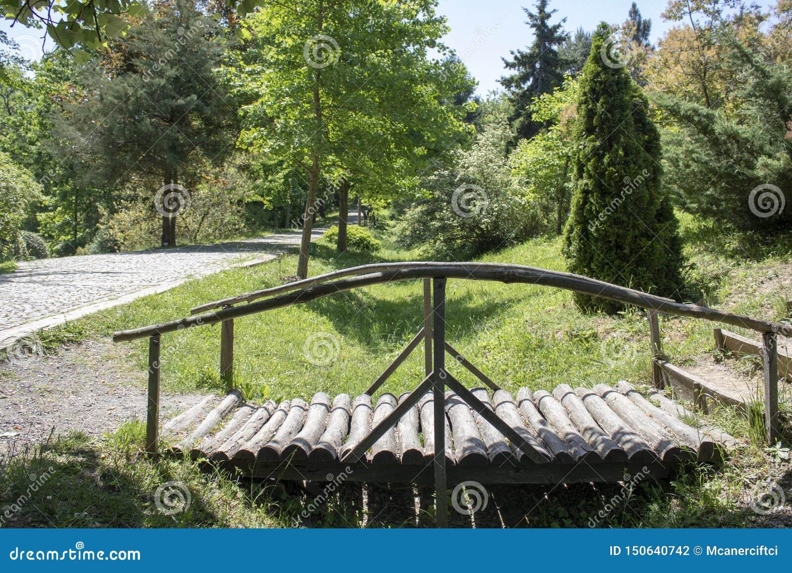Forest roadside wooden bridge