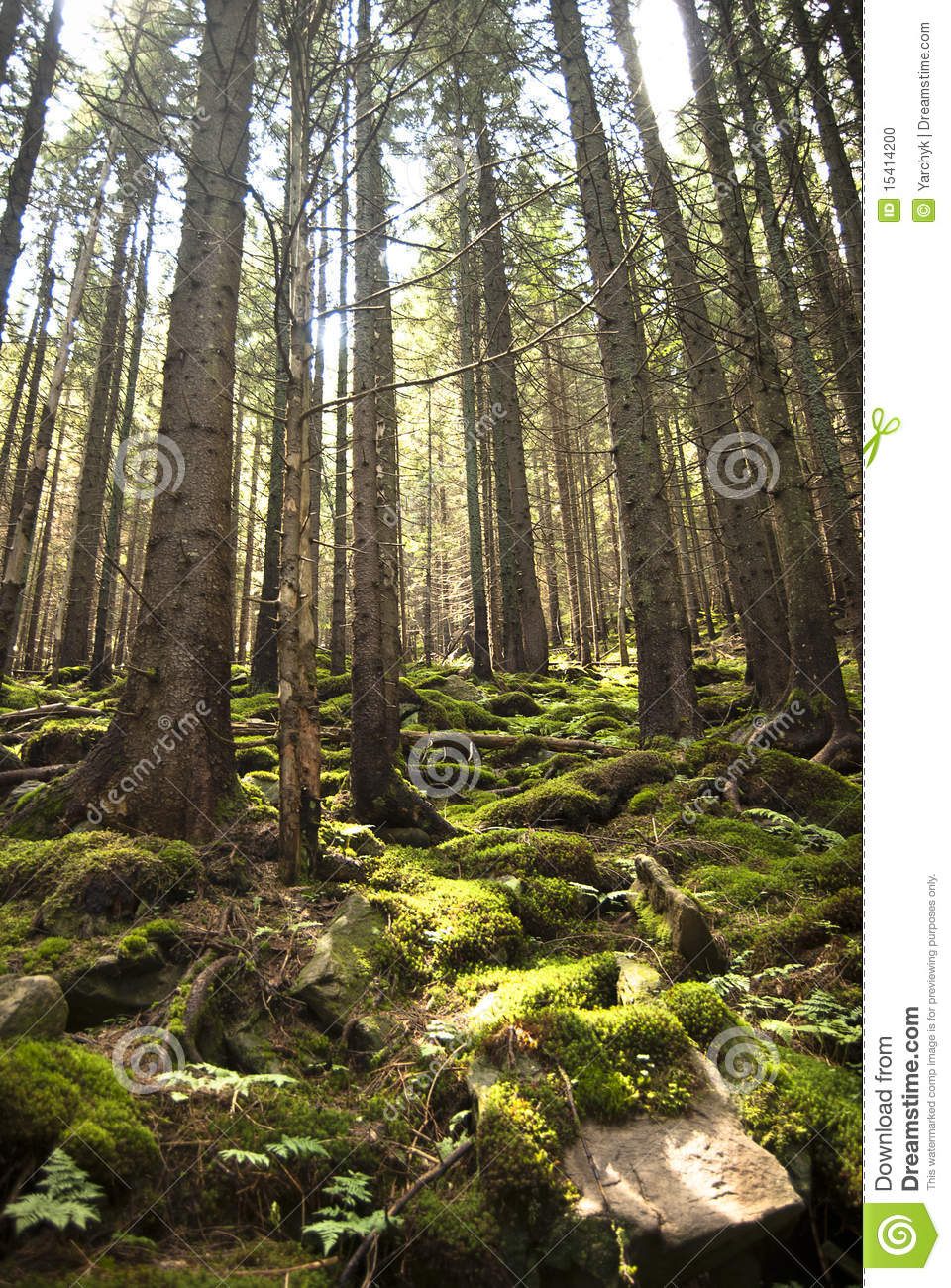 Forest Scene With Moss Stock Photo Image 15414200