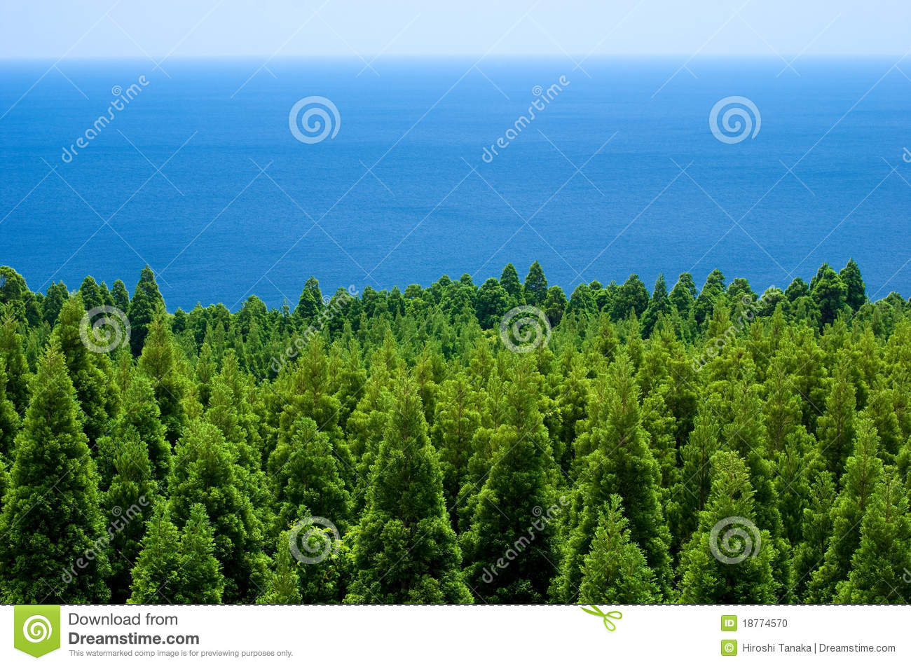 Forest and sea