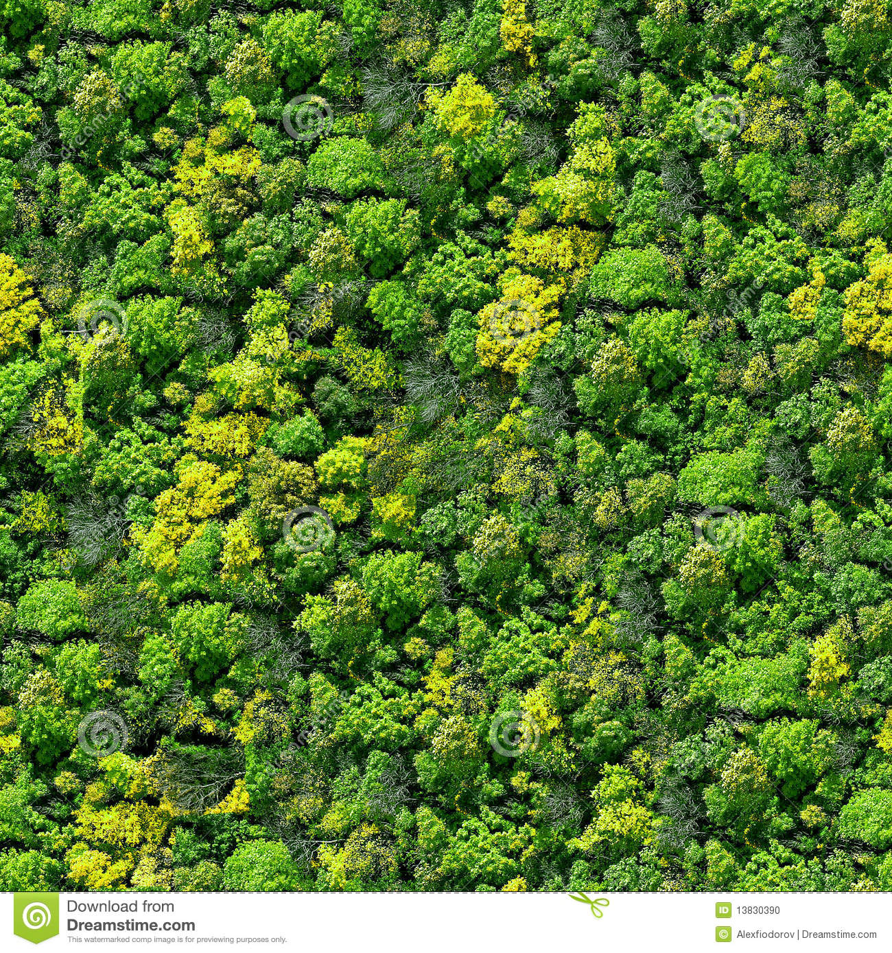 Foresta Floor Plan Forest Seamless Pattern View From Above Stock Photo