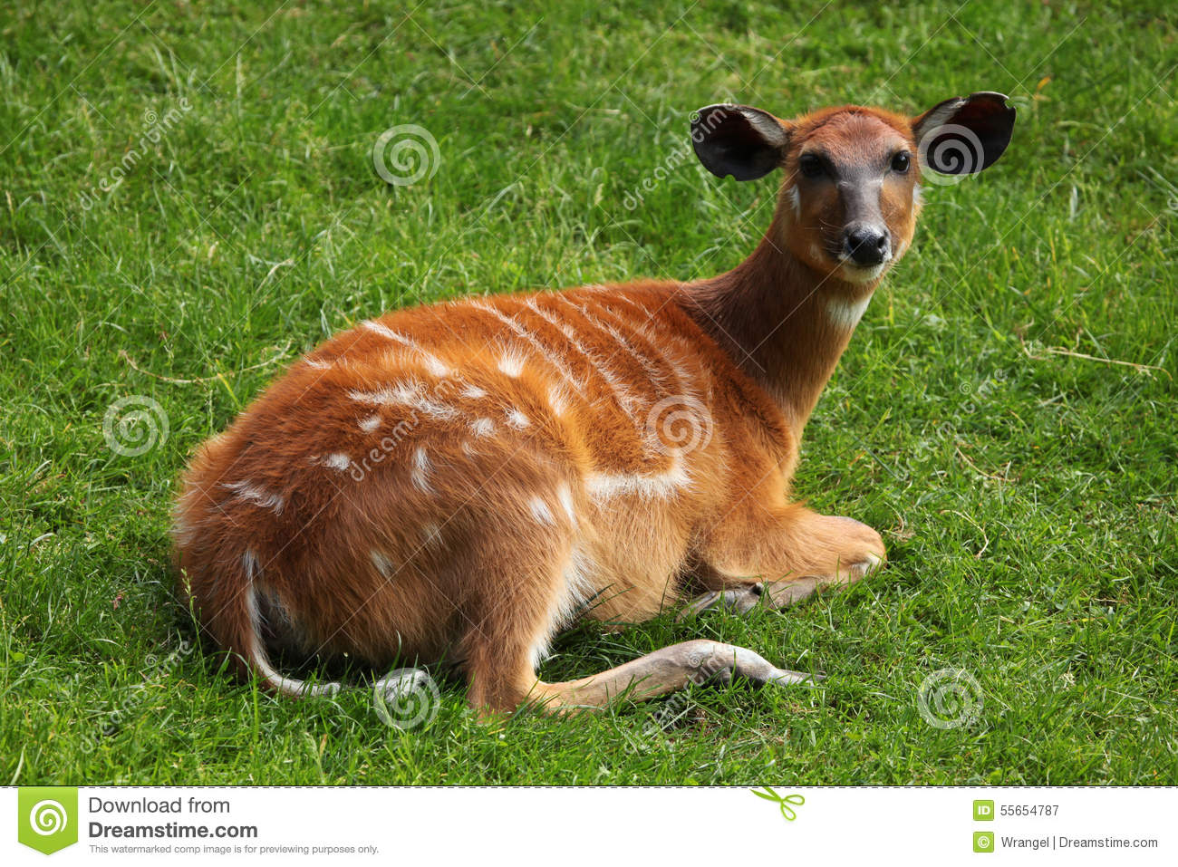 animal testing also known as animal The disease is also known as contagious abortion or bang's disease for brucellosis by blood-testing animals sold from these herds at livestock markets, in some.