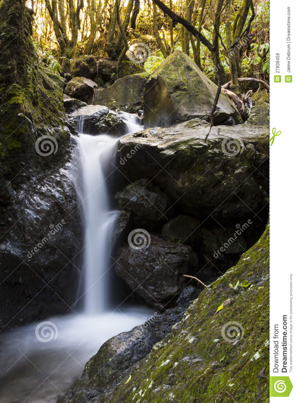 Forest Sounds stock image  Image of cascade, natural - 27838459